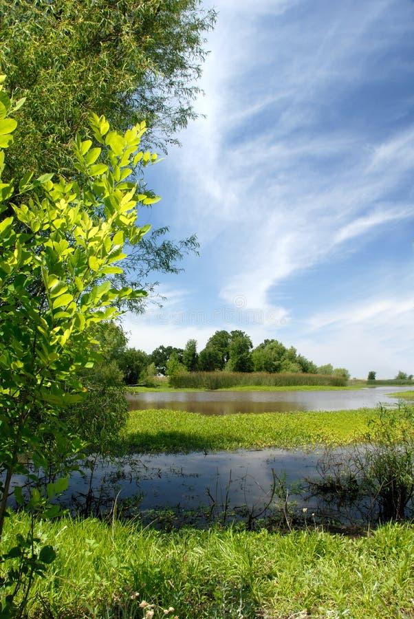 Free Summer Marsh Scene Stock Images - 2510464