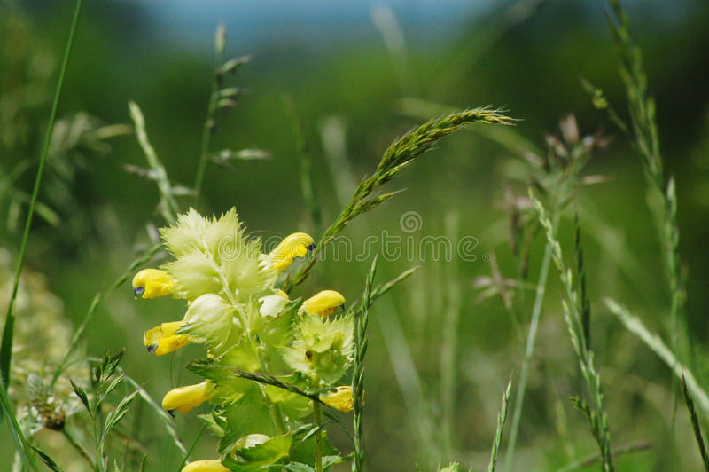 Download Summer meadow stock image. Image of leaf, couple, japanese - 13199899