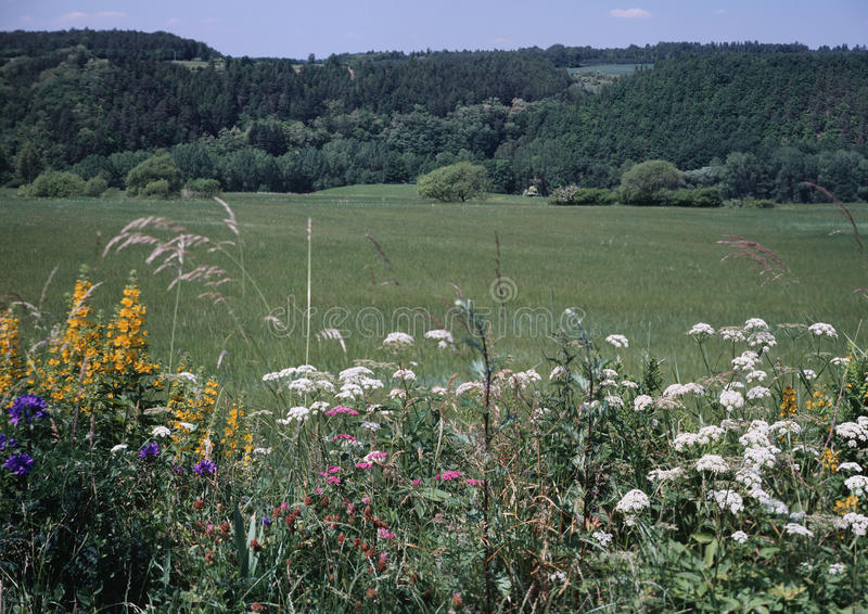 Download Summer meadow stock image. Image of trees, nature, forests - 13943601