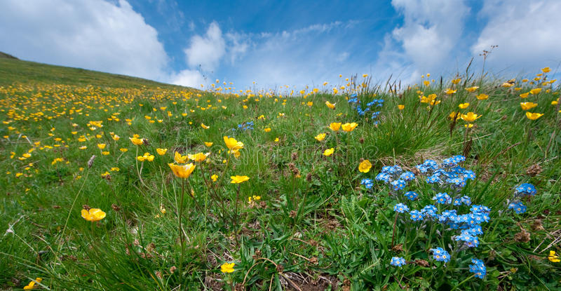 Download Summer meadow stock image. Image of impact, stones, cottage - 19737409