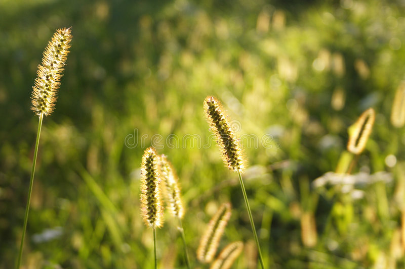 Download Summer Meadow stock image. Image of grass, field, weed - 215831