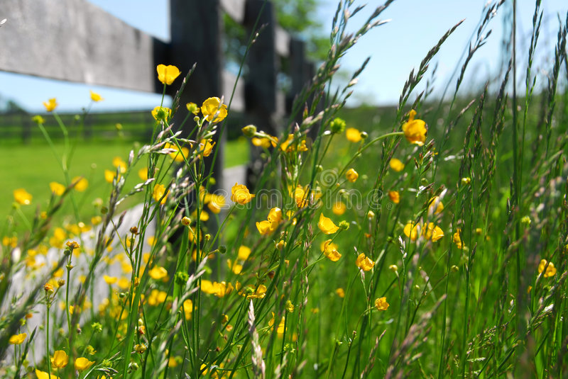 Summer meadow stock photography
