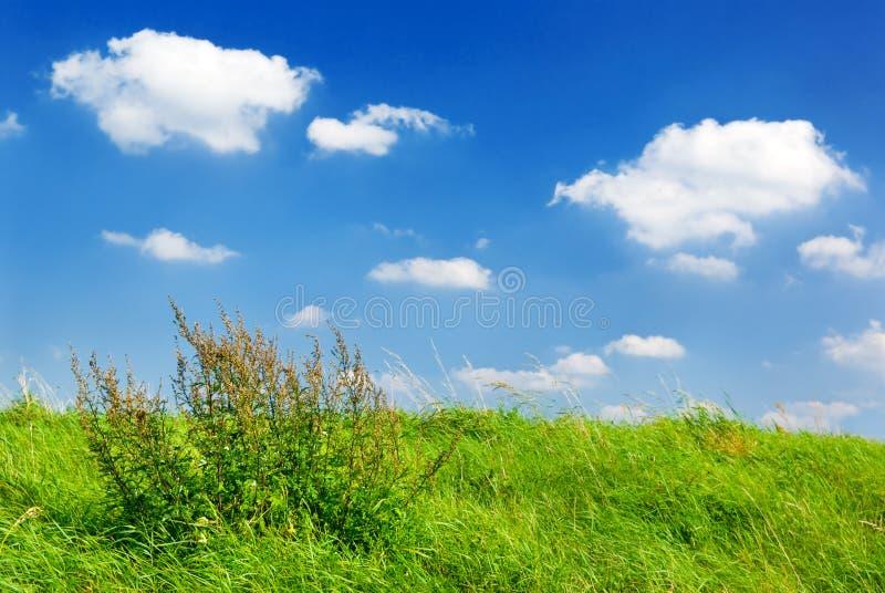Summer meadow. royalty free stock photos