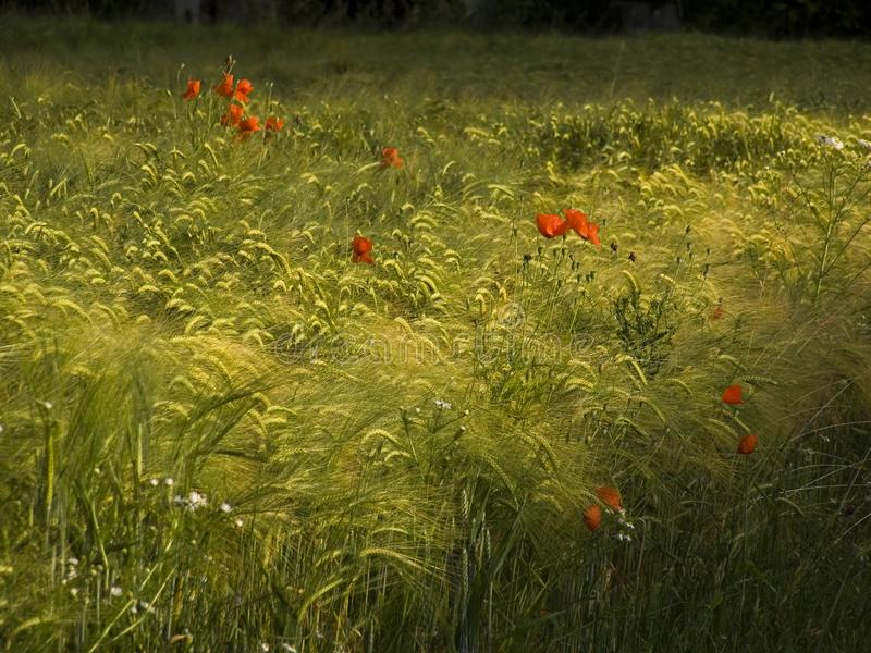 Summer Meadow Free Stock Photo