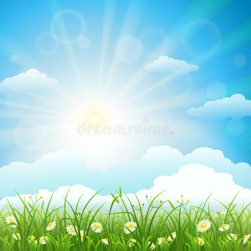 Summer meadow background. With green grass, herbs, flowers, sky and sun stock illustration