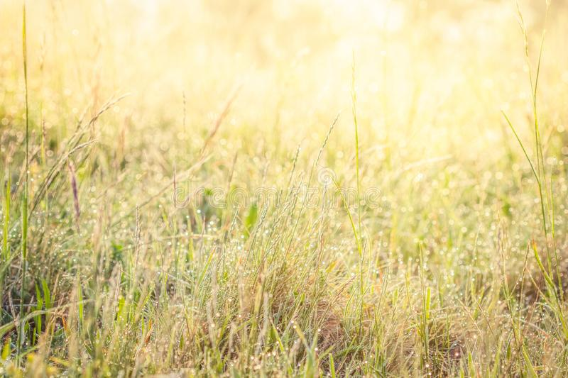 Summer meadow, green grass field in warm sunlight, nature background concept, soft focus, warm pastel tones. Summer meadow, green grass field in warm sunlight stock image