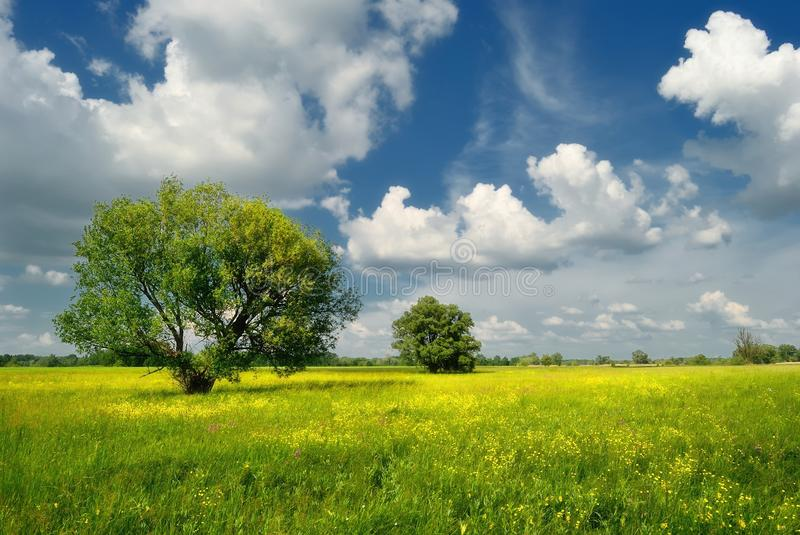 Summer meadow with trees stock image