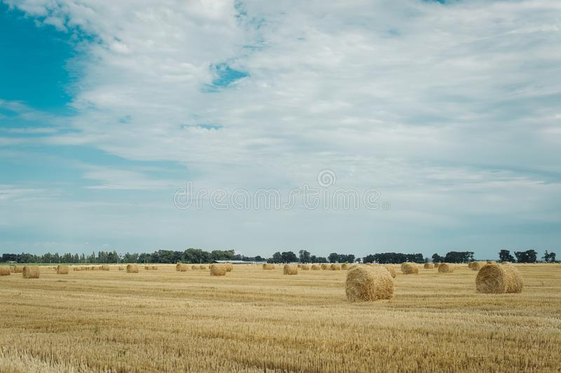 Summer meadow with yellow golden bales of hay bale in the stubble field. Agricultural field and a blue sky with clouds stock photo