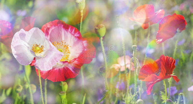 Summer meadow stock images