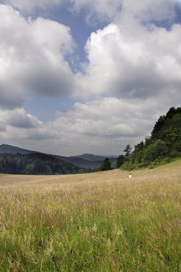 Download Summer meadow, Slovakia stock image. Image of scenic - 13280081