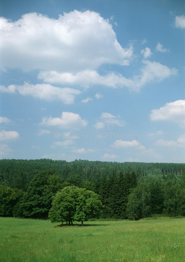 Download Summer meadow with trees stock image. Image of heaven - 22865209