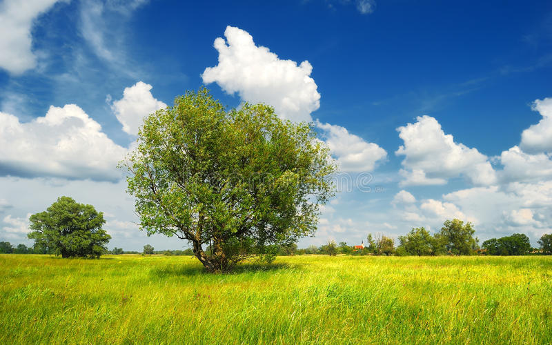 Green summer meadow with trees and clouds royalty free stock image