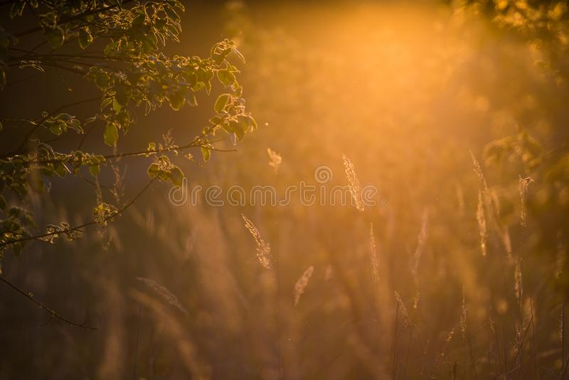 Summer meadow and trees. In orange light stock photo