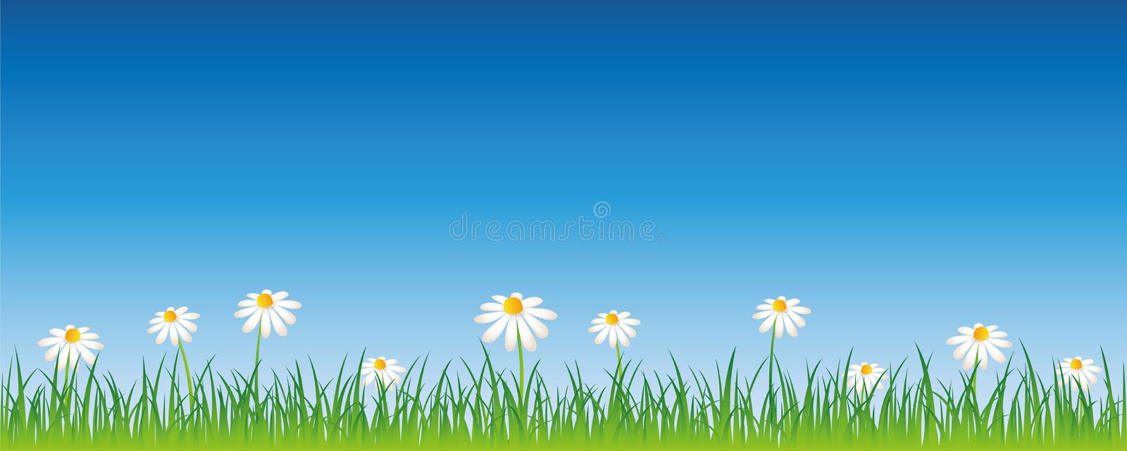 Summer meadow with white daisy flowers banner with copy space. Vector illustration EPS10 vector illustration