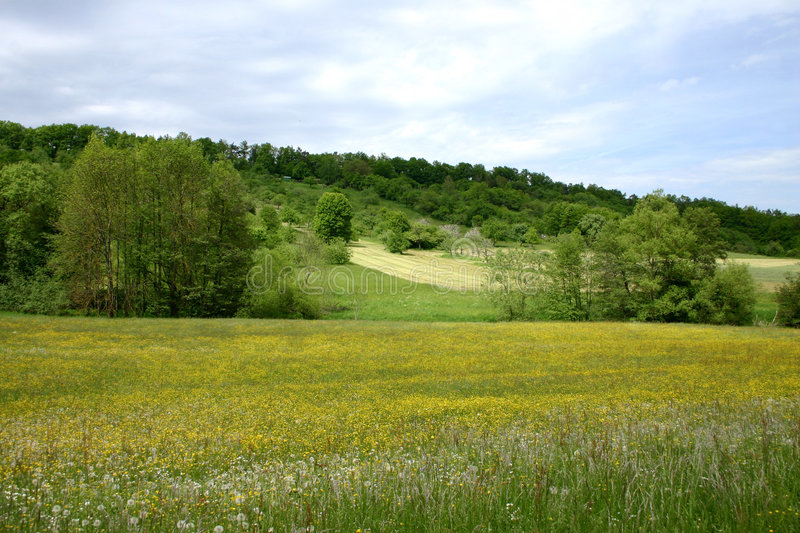 Summer meadows royalty free stock images