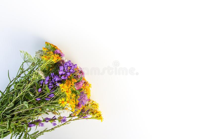 Summer medical herbs bunch. Bouquet of tansy and thorny burdock wild flowers royalty free stock photos