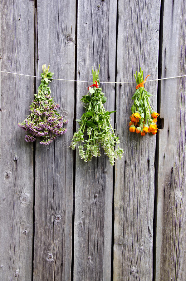 Free Summer Medical Herbs Bunches On Wooden Wall Royalty Free Stock Images - 27454089
