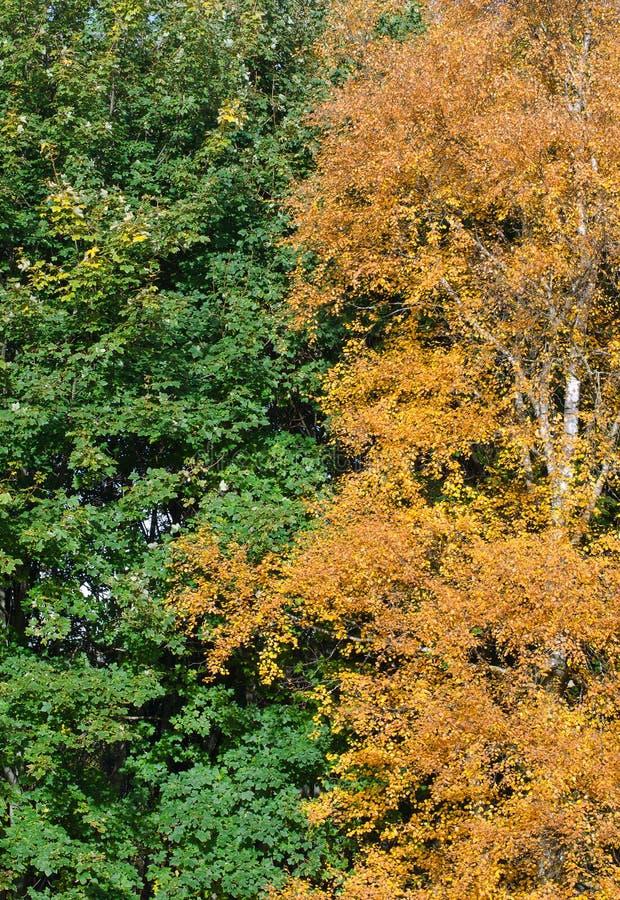 Summer meets Autumn. royalty free stock photos