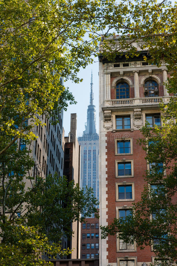 Summer in Midtown Manhattan, NYC. View of Midtown buildings and skyscraper framed by London plane trees in New York summertime stock images
