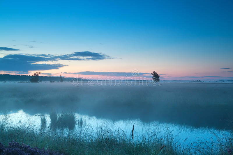 Download Summer Misty Morning On Bog Stock Image - Image: 36059897