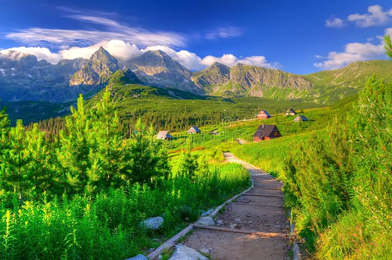 Summer morning colors in mountains. stock photos