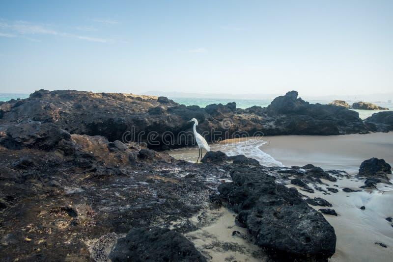 Summer Morning at Punta Negra Beach royalty free stock images