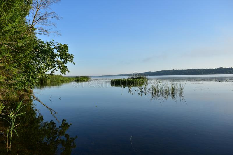 Summer morning river reeds, tree branches bent low over the water royalty free stock photo