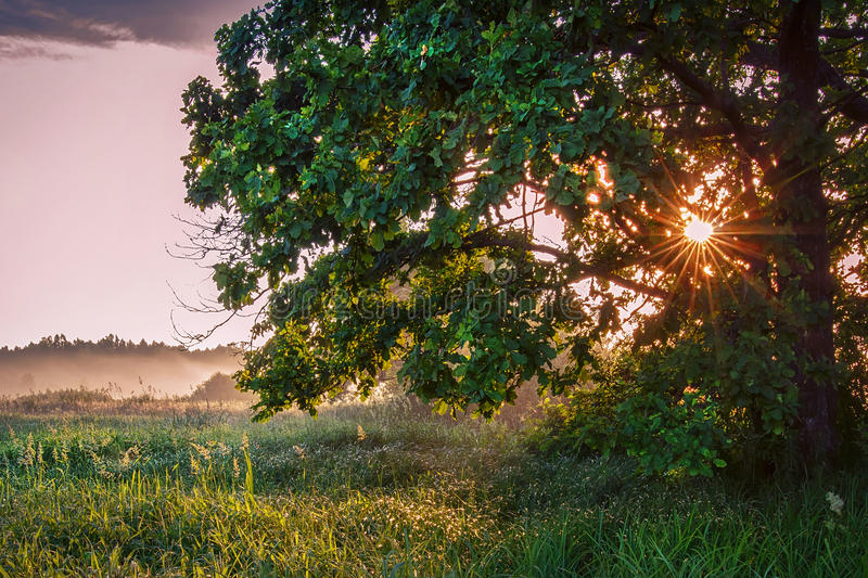 Summer morning sunrise. rays of sun shine through tree on green meadow. Landscape of nature in summer stock images