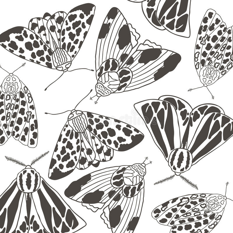 Summer moth coloring page stock image