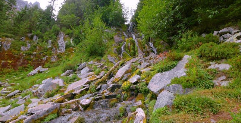 Summer at Mount Rainier National Park, Washington stock photos
