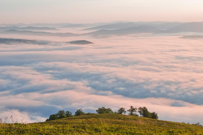 Summer mountain landscape with the sea fog and trees in the fore. Ground royalty free stock images