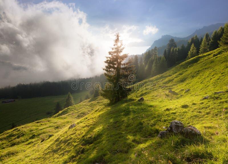 Summer mountain sunny landscape. Dolomites Alps, Italy stock photos
