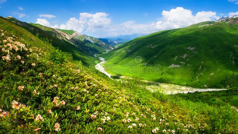 Summer mountains. Mountain landscape on sunny clear day. Grassy mountains valley. Green grass on meadow of hillside. Mountains in royalty free stock photos