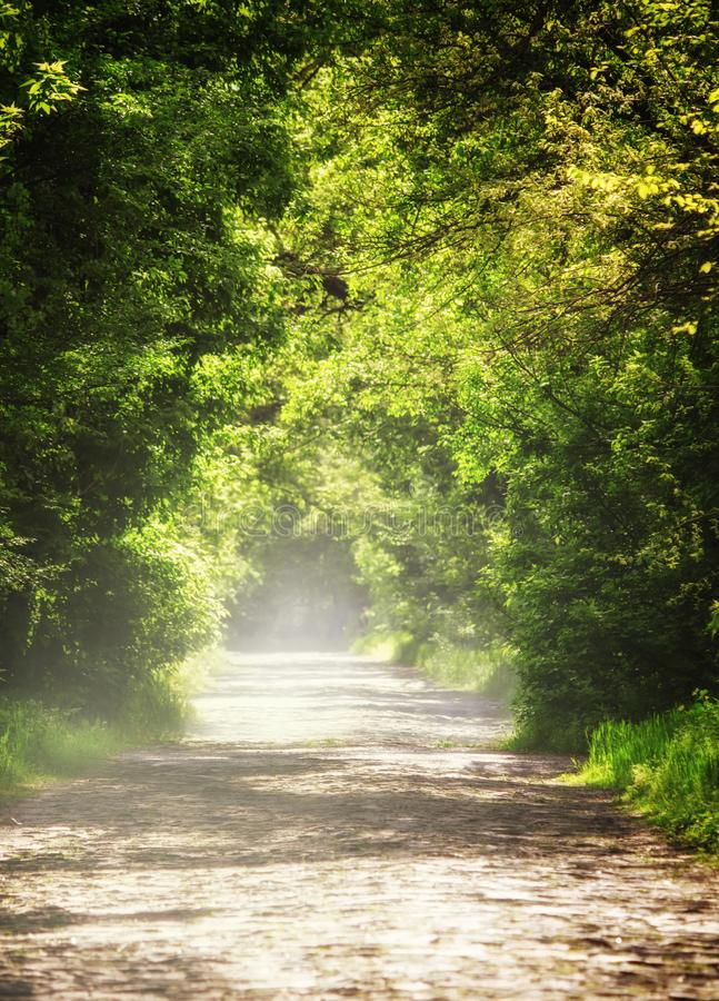 Summer natural background, landscape with stone blocks road and. Tunnel through the trees in a forest or park, purposely blurred image, imitation of painting royalty free stock photo