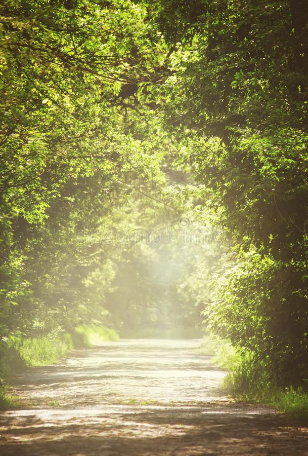 Summer natural background, landscape with stone blocks road and. Tunnel through the trees in a forest or park, purposely blurred image, imitation of painting royalty free stock photos