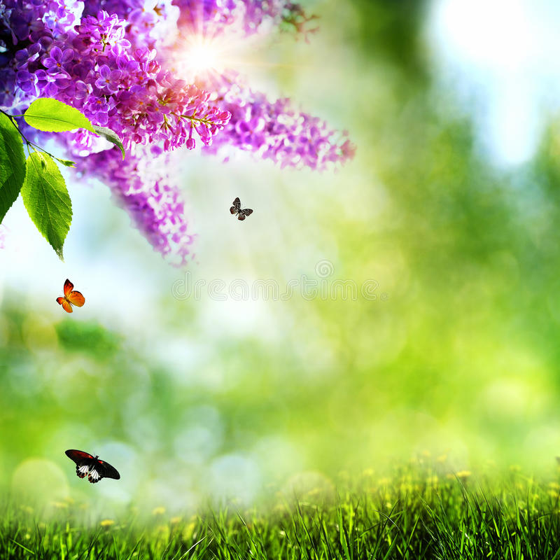 Summer natural backgrounds royalty free stock photos