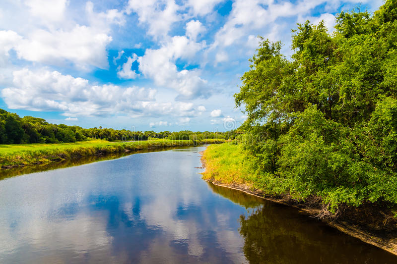 Summer natural landscape with river. Wetland in Florida, USA royalty free stock photography