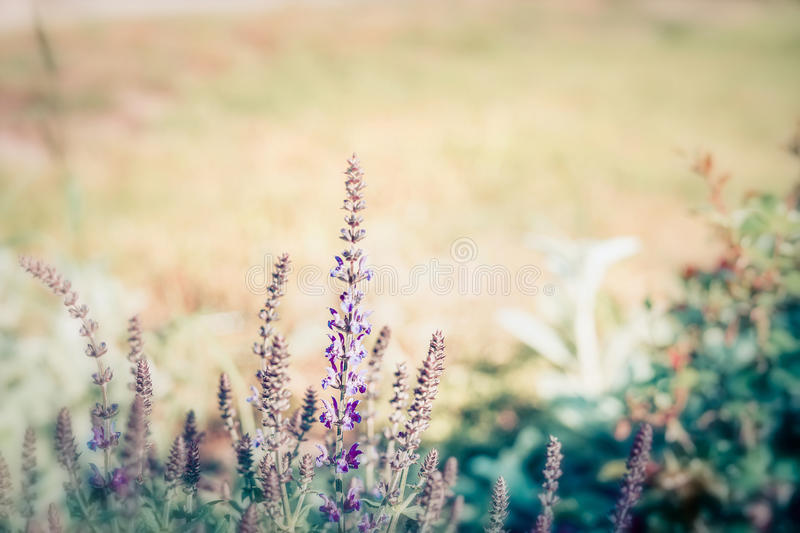 Summer nature background with wild herbs and flowers, outdoor. Nature royalty free stock photo