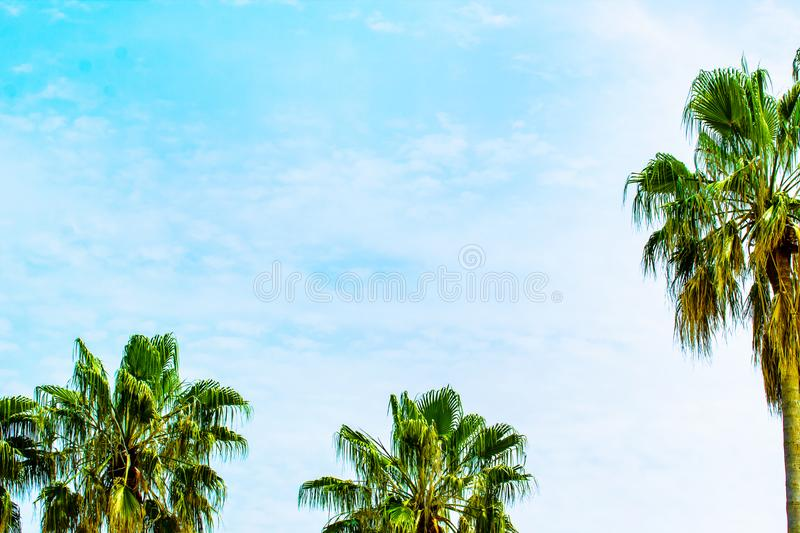 Summer nature scene. coconut palm trees with blue sky royalty free stock photos