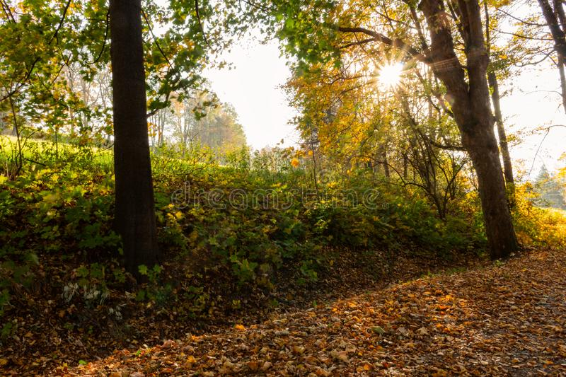 Summer nature. Sunlight in trees of autumn forest.  royalty free stock photo