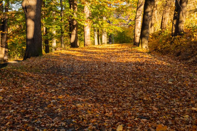 Summer nature. Sunlight in trees of autumn forest.  royalty free stock photography
