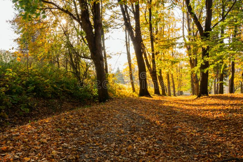 Summer nature. Sunlight in trees of autumn forest.  stock image