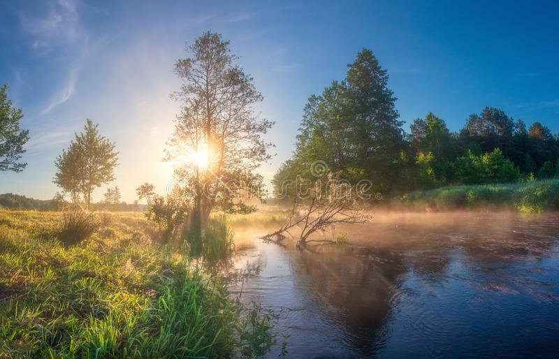 Summer nature at sunrise. Amazing river landscape in morning sunlight. Scenic trees on riverside. Sun shines on green trees on. River shore. Beautiful sunny stock images