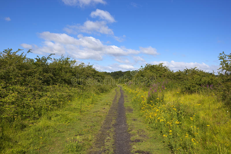 Summer nature trail. A disused rilway track used as a nature trail and bridleway with hawthorn hedgerows and wildflowers under a blue summer sky in the yorkshire royalty free stock images