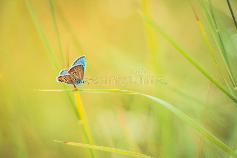 Beautiful nature close-up, summer flowers and butterfly under sunlight. Calm nature background. Summer nature view of a beautiful butterfly with colorful meadow royalty free stock photo
