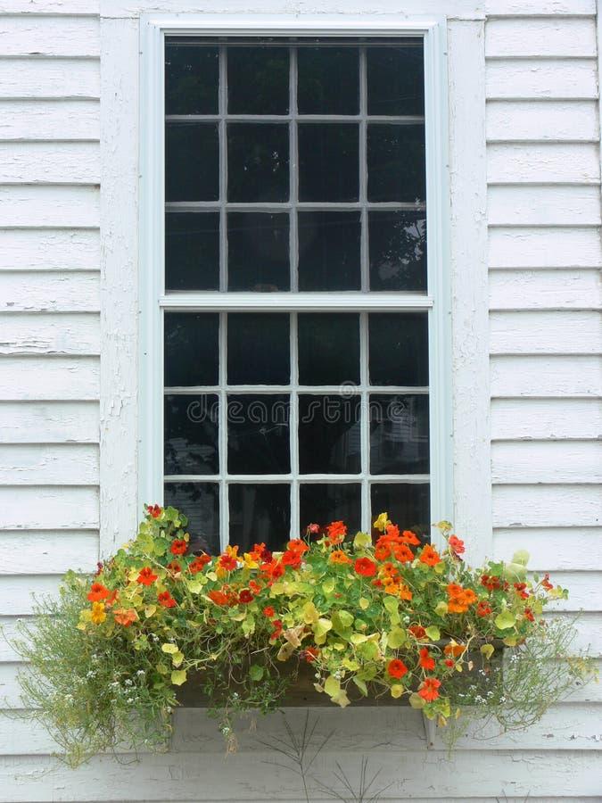 Summer: orange flower window box royalty free stock images