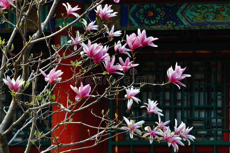 Summer Palace Magnolia Flower royalty free stock photography