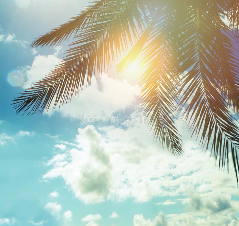 Summer palm trees against blue sky clouds and sun background, happy holiday and tropical resort concept stock images