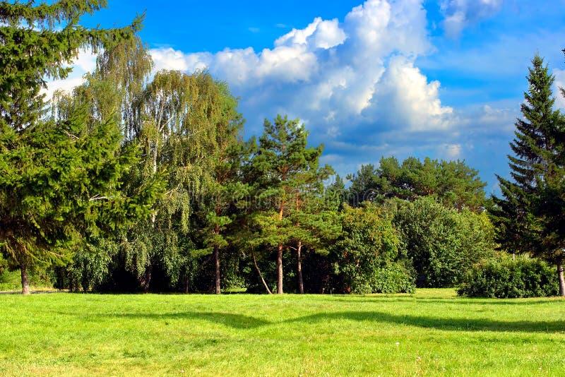 Summer Park Landscape royalty free stock photos