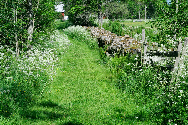 Download Summer path stock image. Image of blue, hedge, hayfield - 884603